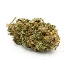 Infusion Fleurs CBD - Sativa L